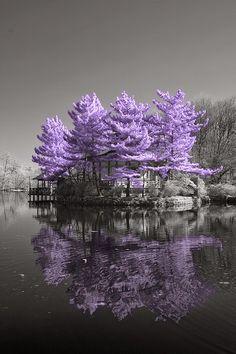 Incredible Pics: Amazing Purple Heaven
