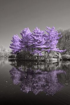 Amazing Purple Heaven