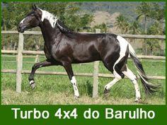 Turbo 4x4 do Barulho - Campolina stallion