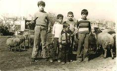 çocuklar koyun otlatıyor (1970'lı yıllar, Bahçelievler) #istanbul #istanlook