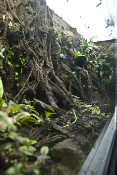 Gorgeous vivarium with some basic instructions for how to DIY.