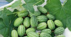 Gurka, Djungel- Wok, Cucumber, Watermelon, Fruit, Vegetables, Vegetable Recipes, Zucchini, Veggies