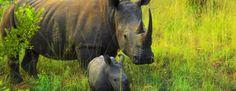 The Best of Tanzania Safari Adventure 6 days | Safari specialist Shadows Of Africa