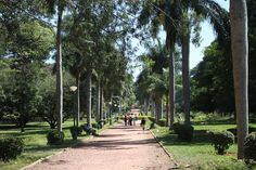 These palm trees create a beautiful vista through the gardens.