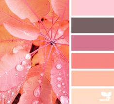 Autumn Glow   Design Seeds More