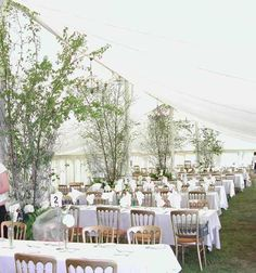 Silver birches - would like to do this for the British wedding