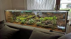 Terrariums, Frog Terrarium, Reptile Terrarium, 125 Gallon Aquarium, Aquarium Fish Tank, Planted Aquarium, Reptile Habitat, Aquarium Design, Chameleons