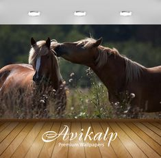 Avikalp Exclusive 2 Horses HD Wallpapers for Living room, Hall, Kids Room, Kitchen, TV Backg 3d Wallpaper Glass, 3d Wallpaper Buddha, 3d Wallpaper Butterfly, 3d Wallpaper Ceiling, 3d Wallpaper Painting, 3d Wallpaper Cartoon, 3d Wallpaper Design, 3d Wallpaper Living Room, 3d Wallpaper For Walls