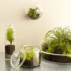 DIY Terrarium: Plants that love glass. Make your own tabletop garden! 8 DIY terrariums you can assemble in less than 30 minutes.