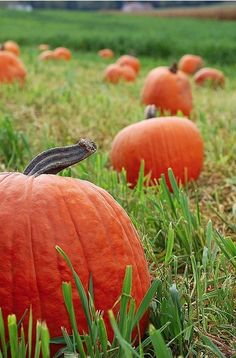 Country Pumpkin Patch