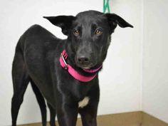 www.PetHarbor.com pet:AURO.A171494