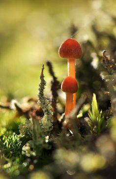 Mushrooms by Tjidididi on Flickr.
