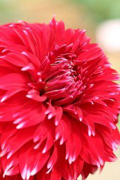 Explore Shingan Photography's photos on Flickr. Shingan Photography has uploaded 1294 photos to Flickr.