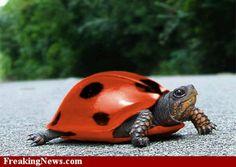 """It's a """"lady turtle"""""""