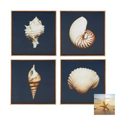 Set of 4 Shell Canvas Prints - Looks fabulous over a bed with navy blue and white bedding.   Available on SeasideBeachDecor.com #coastaldecor #beachdecor #nauticaldecor