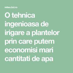 Solar, Permaculture, Plant