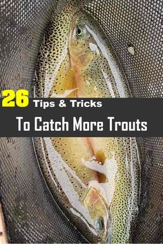 26 different tips and tricks for catching trout without a fly rod. It's a lot easier than you may think and loads of fun. Try using these simple tips and tricks below, and you'll be catching boatloads of trout in no time. Trout Fishing Bait, Trout Bait, Trout Fishing Tips, Fishing Rigs, Walleye Fishing, Fly Fishing, Women Fishing, Fishing Tackle, Fishing Lakes
