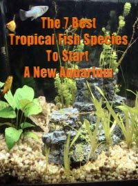 Kindle FREE BOOK days:  Aug31 – Sept 2nd   -- 7 Best Beginning Tropical Fish Species For Starting A New Aquarium  A detailed look at seven fish families that are suitable for beginning a tropical fish aquarium and one fish to never use for starting a new tank.