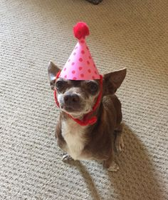And this party animal.   18 Cute Animals Who Will Help Take Your Mind Off Things