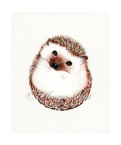 Hedgehog Art Print Watercolor Woodland от AnnyaKaiArt на Etsy
