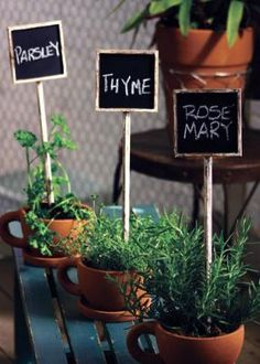Coffee Cup Herbs