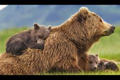scenic photos of animals with people - Google Search