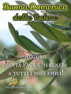 Buona Domenica delle Palme auguri amici Good Morning, Plant Leaves, Blessed, Blessings, Bouquet, Google, Frases, Calendar, Photos