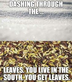 Dashing through the...leaves