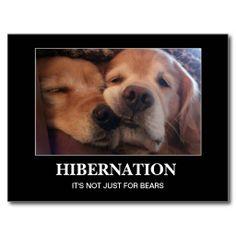 Golden Retriever Hibernation Stay Warm Postcard by #AugieDoggyStore.