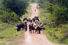 Why not?: Lake Mburo National Park, a little big park (part1...