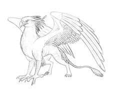 Contest prize for That is a sketch from s gryphon Izora. I drew for the first time a Gryphon I hope you like it a bit °. Mystical Creatures Drawings, Mythical Creatures Art, Creature Drawings, Bird Drawings, Animal Drawings, Animal Sketches, Art Sketches, Griffin Drawing, Griffin Tattoo