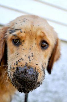 digging in mud? me??