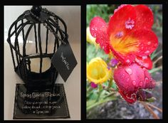 Spring Garden Flowers. Close your eyes and imagine walking through a cottage garden in Springtime. Triple scented soy tealight candles, in attractive birdcage. Perfect for that special gift for family or friends, or to evoke wonderful memories for yourself $US10.86