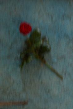 élan vital une rose