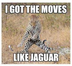 Move like a jaguar