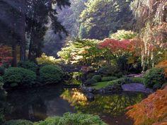 Een echte Japanse tuin. Om de vijver staan o.a. coniferen en (Japanse) esdoorns.