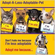 I love my pit bull,old chow, cerebellar hypoplasia kitten, cat with a burnt face - less adoptable pets are the best! Dog Love, Puppy Love, Mundo Animal, Animal Welfare, Animal Rescue, Rescue Dogs, Shelter Dogs, Pet Adoption, Animal Adoption