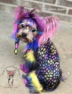 Cyberpunk, Creative Grooming, Rainbow Fairies, Dog Haircuts, Absolutely Fabulous, Cute Cats And Kittens, Dog Grooming, Black Girl Magic, Yorkie