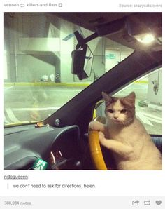 21 Times Tumblr Told The Truth About Cats- tehehehe some are really funny