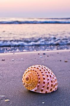 Give someone a seashell ~ to brightened their day!