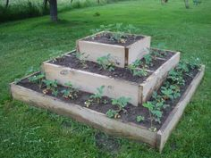 Eddie made me a great raised strawbery bed this year. We had a great crop our first year. I was too impatient to do as recommended and p. Strawberry Beds, Strawberry Planters, Strawberry Garden, Raised Garden Bed Plans, Raised Beds, Outside Plants, Lawn And Garden, Garden Fun, Small Space Gardening