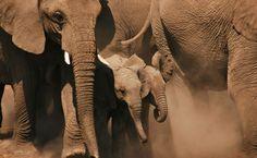 Elefantenfamilie im Etosha National Park
