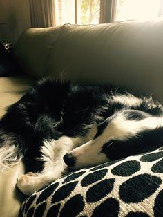 Sunday snoozin'