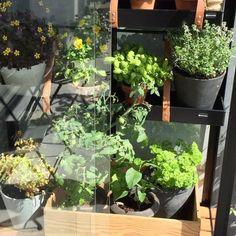 Balcony, Plants, Urban, City, Instagram, Lawn And Garden, Balconies, Cities, Plant
