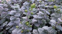 Variety of Seeds & Bulbs. Greek Language, Herb Seeds, Herb Garden, Evergreen, Perennials, Herbs, Leaves, Canning, Flowers