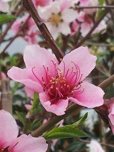 Spring... New Hope Nursery.com