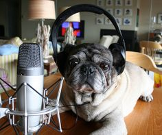 dog podcast with earphones in mywebroom  #innovation, #technology, audio, bored, comedy, entertainment, fun, interesting, podcasts, radio