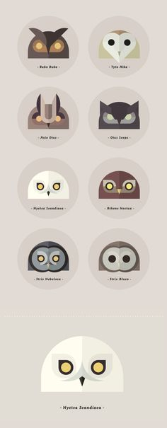 owls of the world by alessio sabbadini