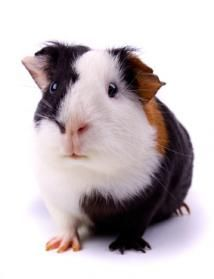 """Ha Ha, the label said """"Hamster from Petcentricity"""""""