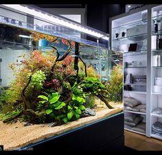 #greenaqua #gallery #showroom #aquascaping #aquarium #plantedtank #underwater…